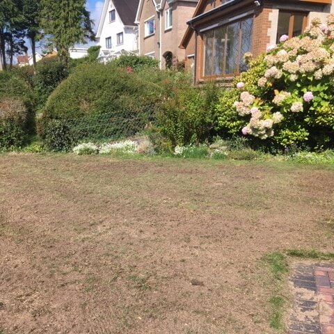 Professional Lawn Scarification