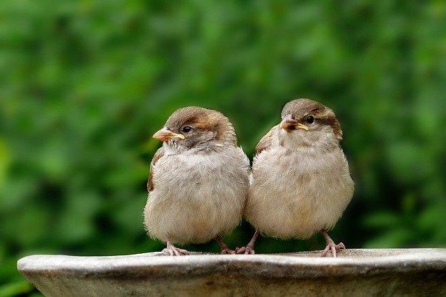 are birds good for your garden