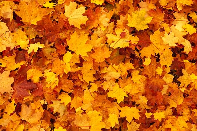 autumn lawn diseases