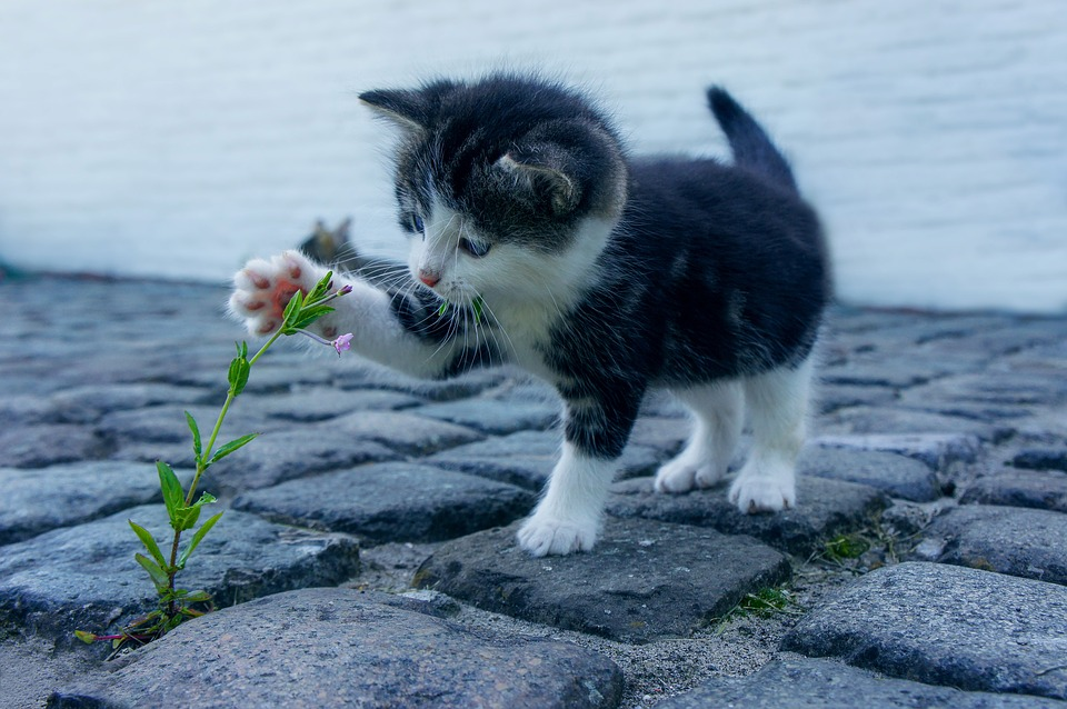 pet playing with plant