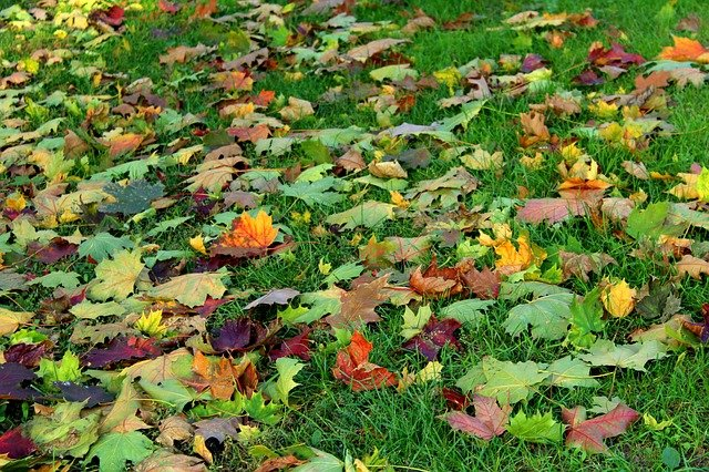 what should I put on my lawn in October