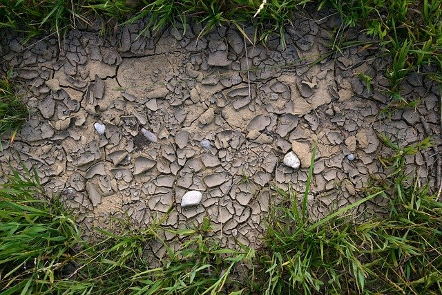 how to help lawn recover from drought
