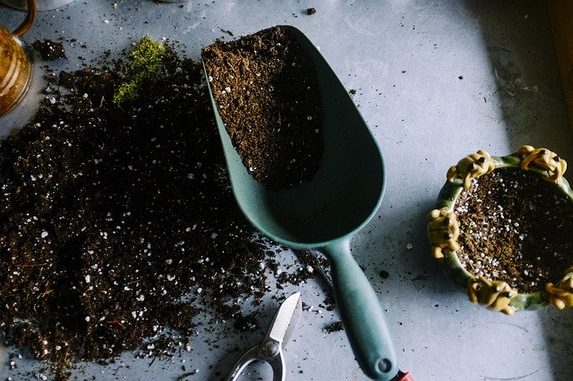 Gardening for better mental health
