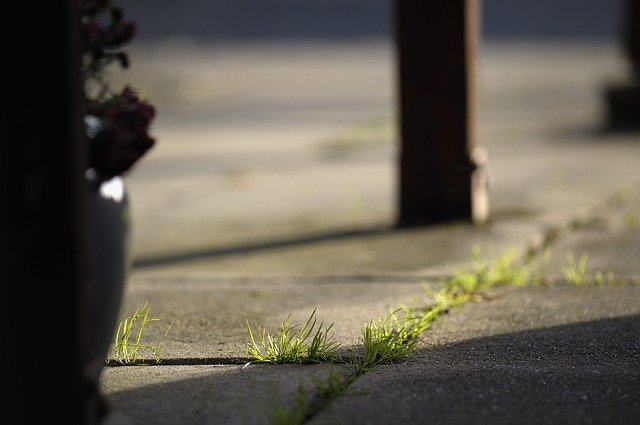can I use a pressure washer to get rid of weeds