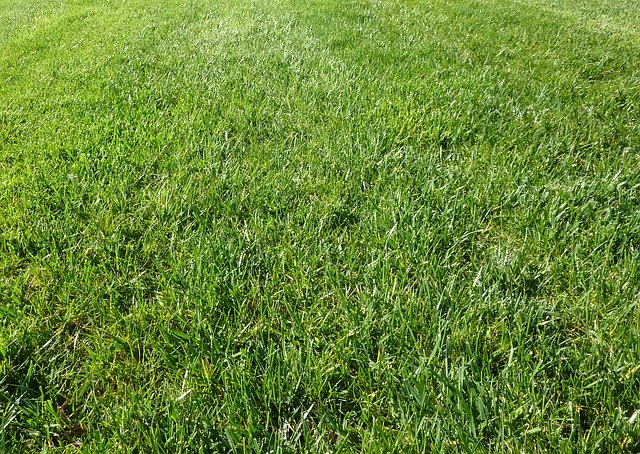 healty lawn, hollow tine aeration