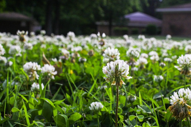 when should I kill weeds in my lawn
