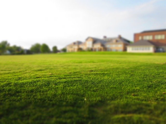 how to diagnose lawn problems