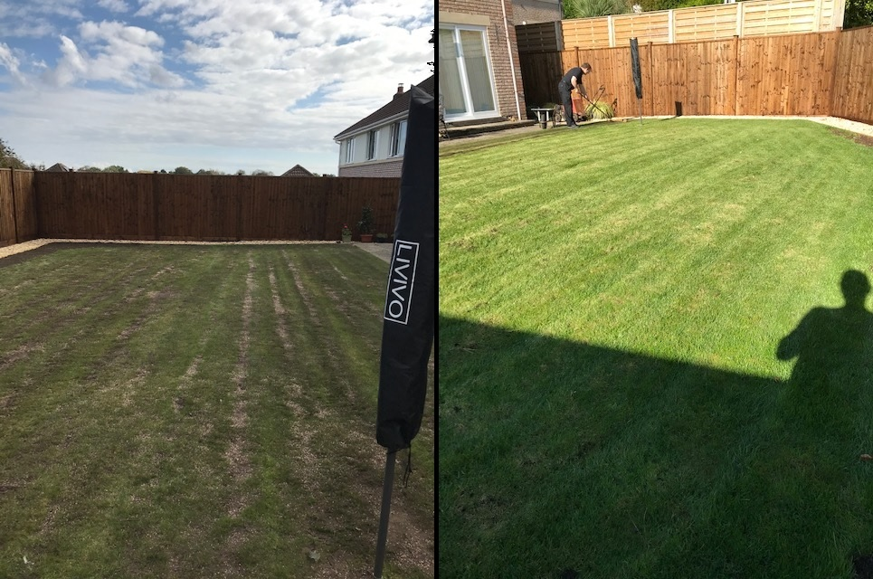 Lawn before and after top dressing