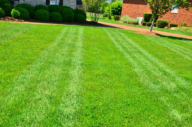 bank holiday lawn care