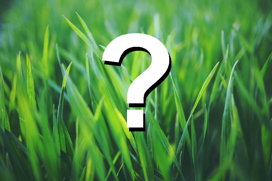 Lawn care questions