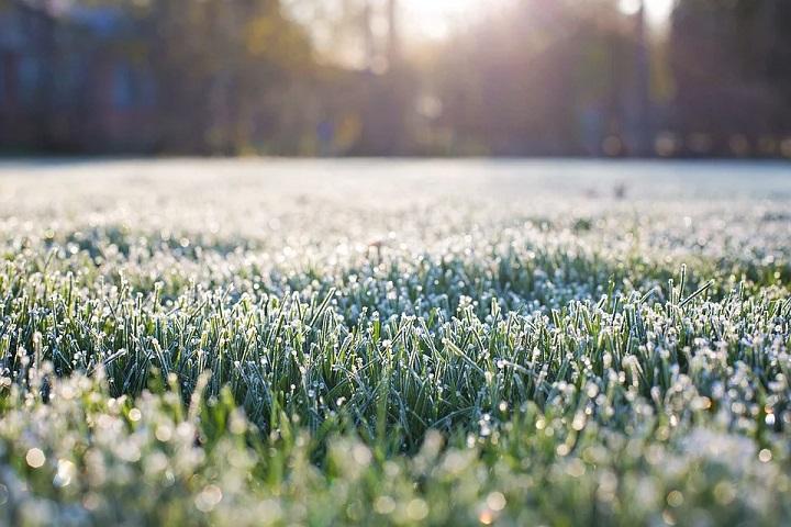 lawn frost damage