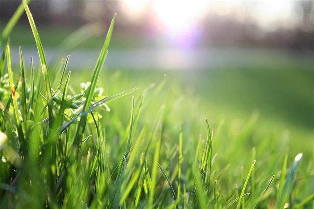 Grassy lawn in springtime