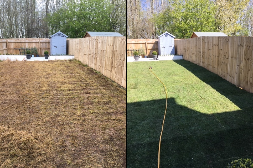 Lawn Treatment Before and After