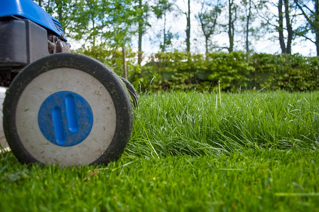 lawn tips for your small garden