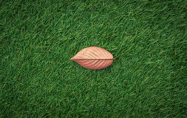 Problems with Artificial Grass