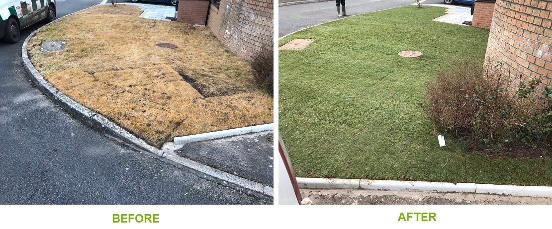 New lawn - before and after photos