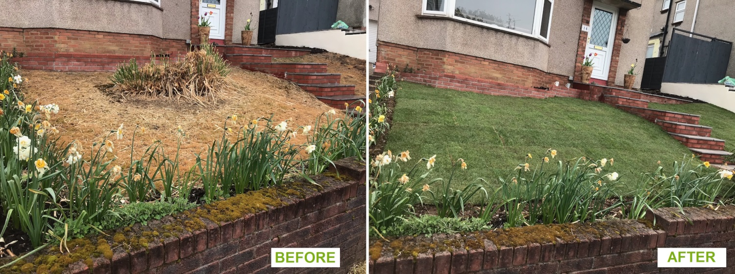 New lawn - before and after
