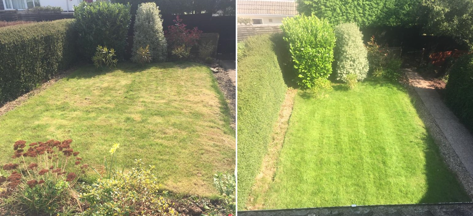 lawn scarification before and after