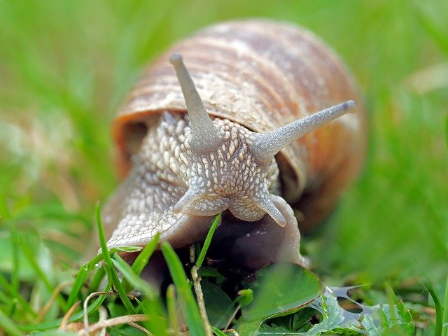 are slugs and snails bad for my lawn