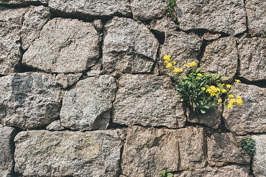 Weeds growing through wall