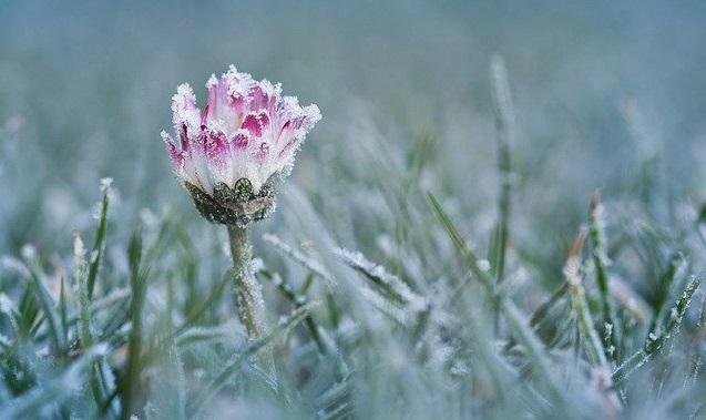 flower in winter