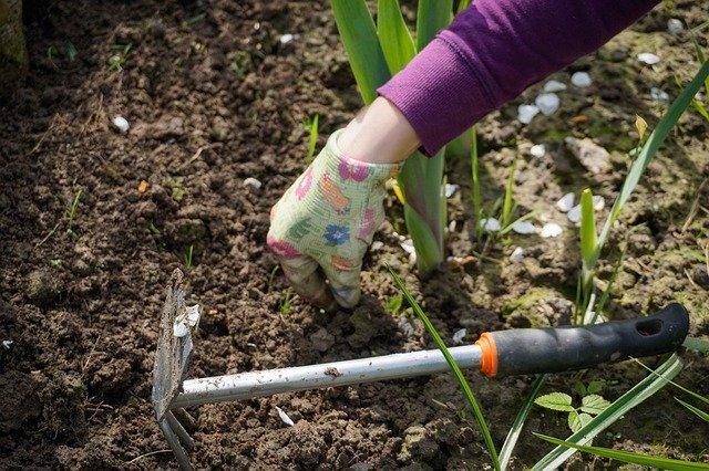how do garden weeds spread